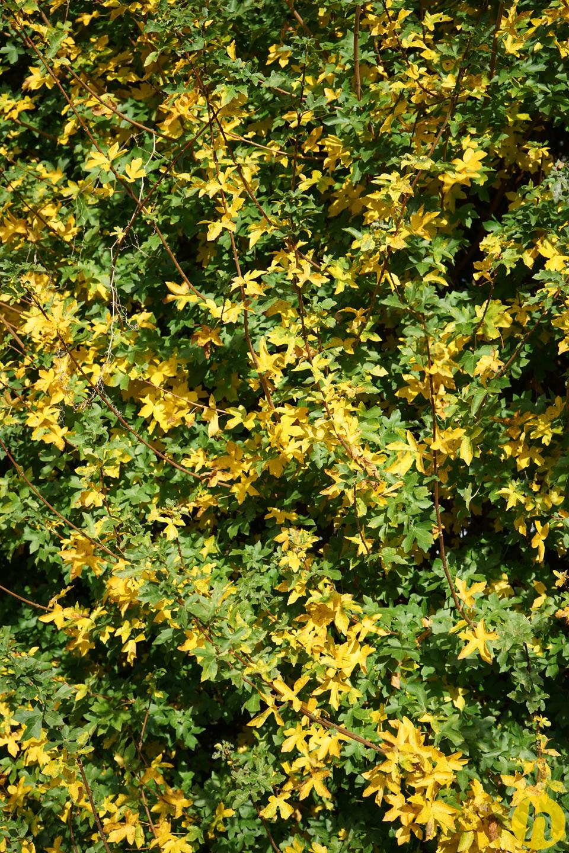 Blattgoldrausch