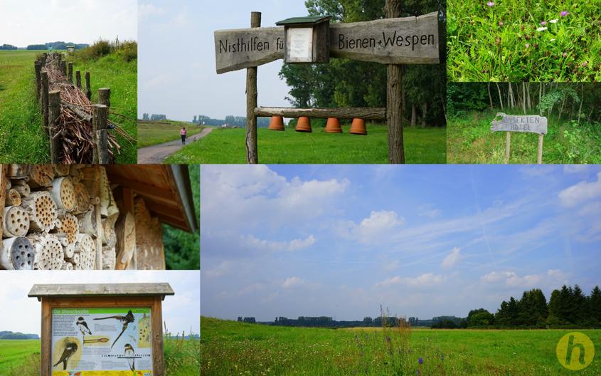 Collage_Naturschutzgebiet